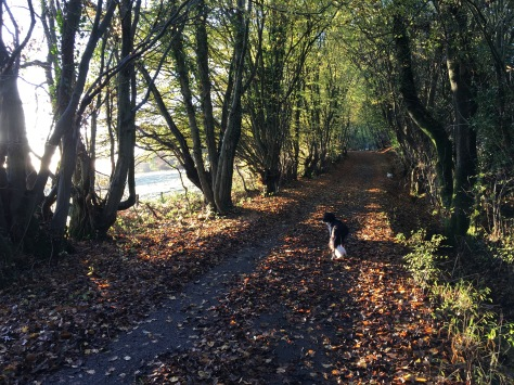 beautiful sunny autumn walk