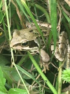 nervous amphibians
