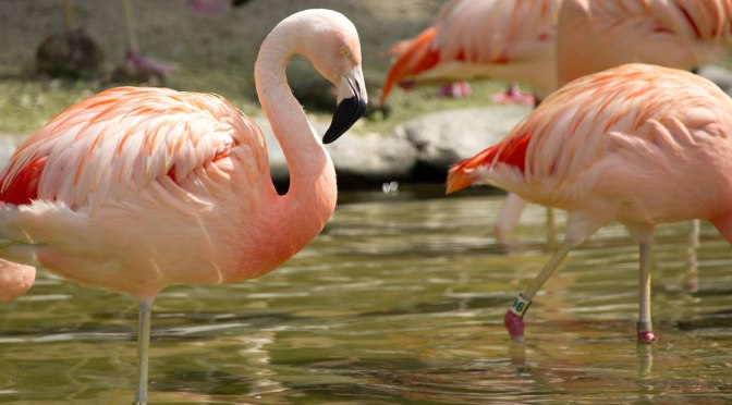 The Year of the Flamingo